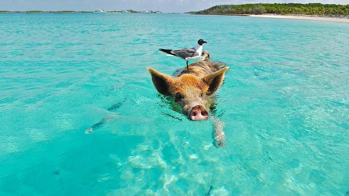 Bahama-szigetek, Bahamák
