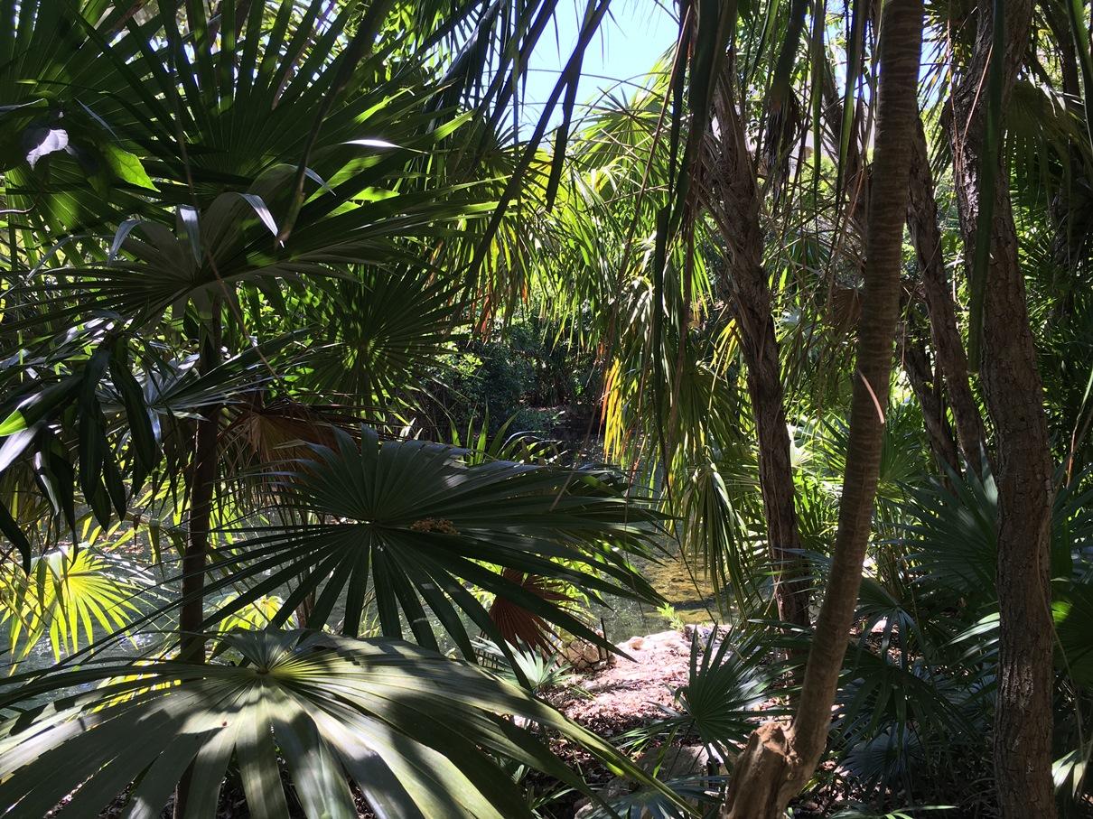 Mexikó, Yucatán vad és buja dzsungel